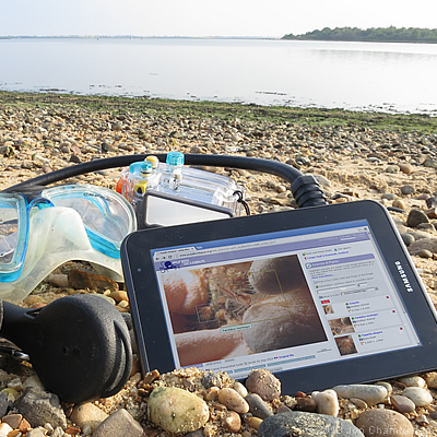 Picture of a the Purple Octopus website on a tablet on a beach